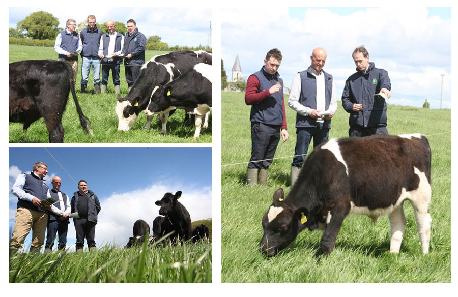 Beef Conference and Farm Walk 2015