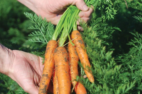 More and more Irish organic produce is being grown each year as its popularity grows