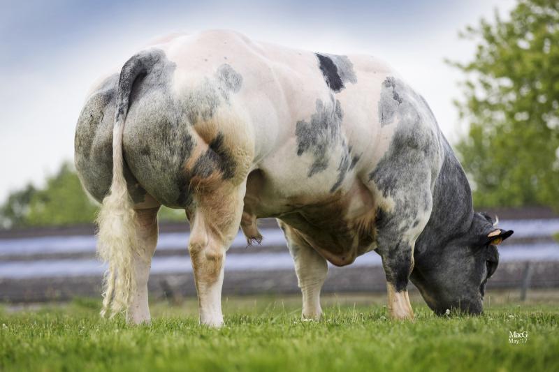 Myostatin Gene | Blog from Progressive Genetics Ireland