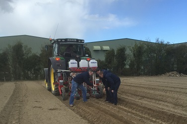 Carrot Planting 2016