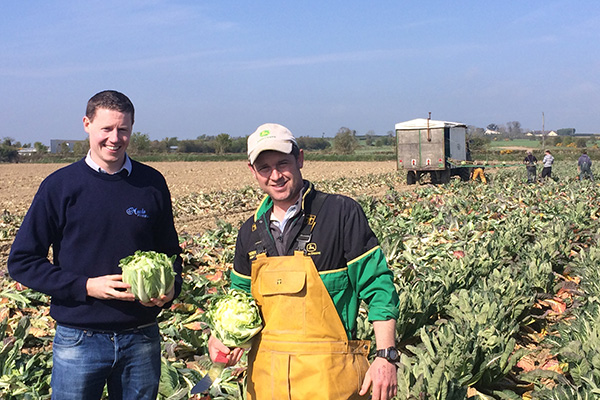 Roy and Colm at the cauliflower harvest.