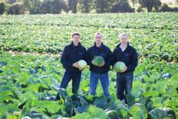 Roy, Patrick and Ruairi visit our cabbage crop at harvest time