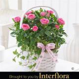 Mother's Day Pink Rose Basket