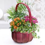 Seasonal  Planted Basket