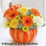 Charming Pumpkin Ceramic