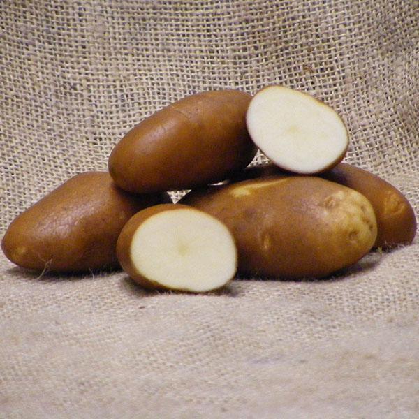 Main Crop Potato: Golden Wonder