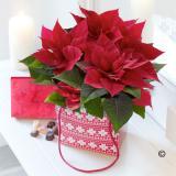 Poinsettia Gift Bag with Chocolates